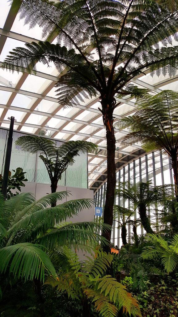 Tall Trees in Sky Garden London